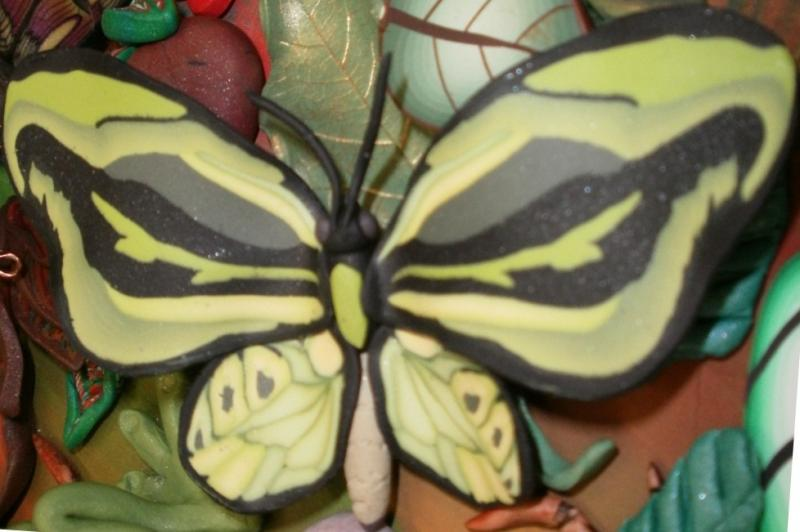 PCGMN - Forest Floor Project - Ornithoptera priamus